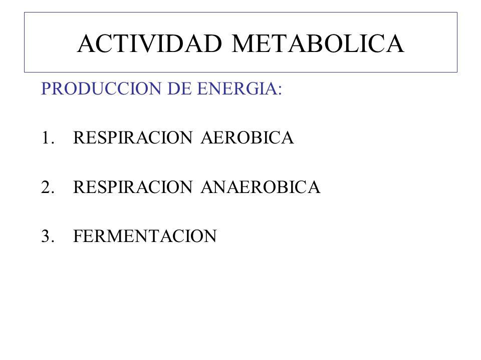 ACTIVIDAD METABOLICA PRODUCCION DE ENERGIA: RESPIRACION AEROBICA