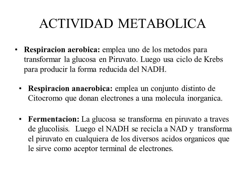 ACTIVIDAD METABOLICA