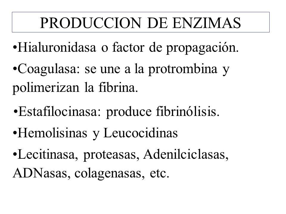 PRODUCCION DE ENZIMAS Hialuronidasa o factor de propagación.