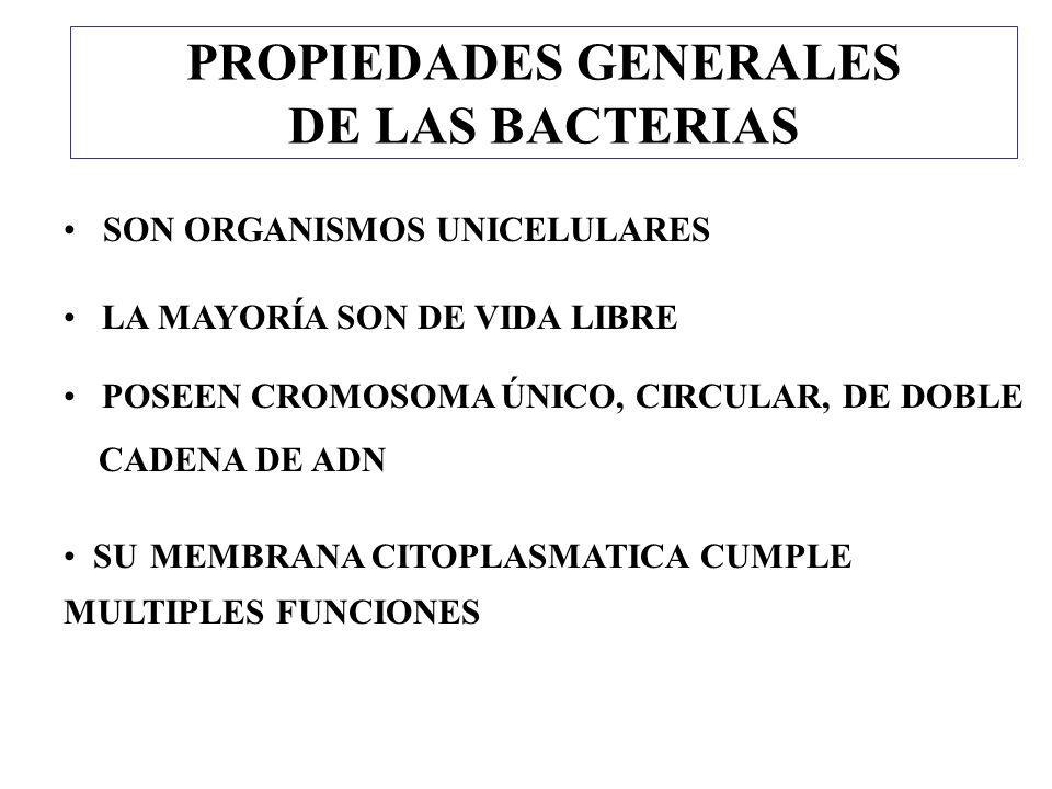 PROPIEDADES GENERALES DE LAS BACTERIAS