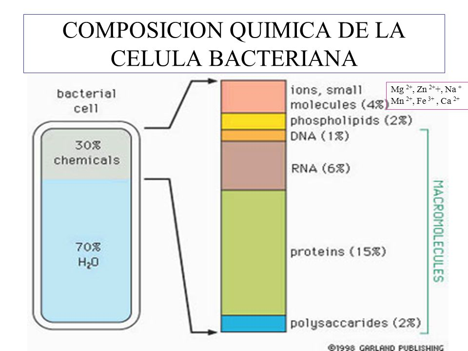 COMPOSICION QUIMICA DE LA CELULA BACTERIANA