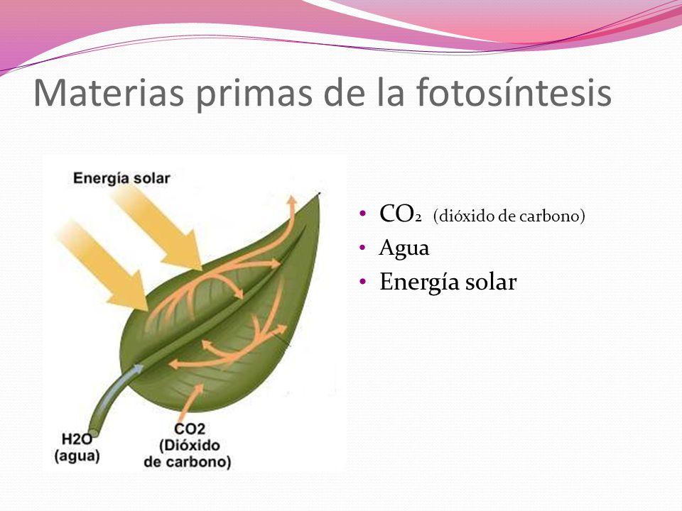 Materias primas de la fotosíntesis