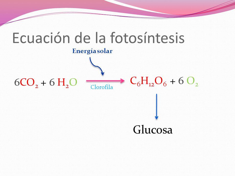 Ecuación de la fotosíntesis