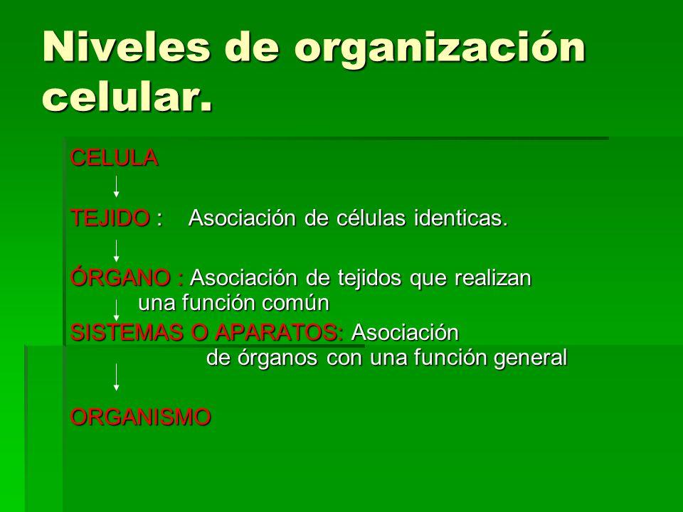 Niveles de organización celular.