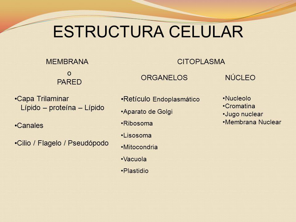 Lípido – proteína – Lípido