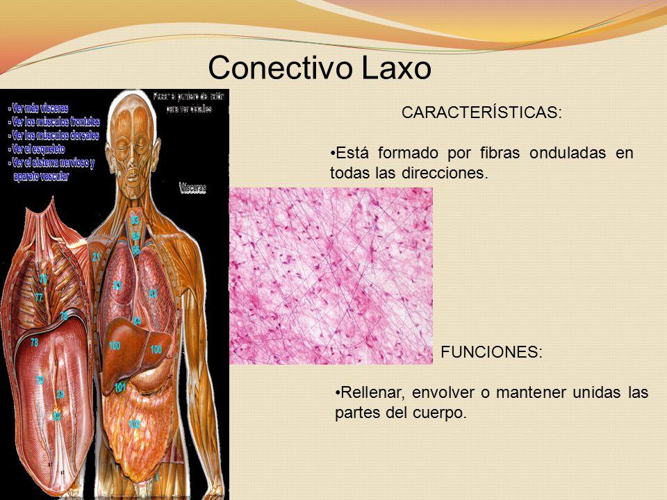 Conectivo Laxo CARACTERÍSTICAS: