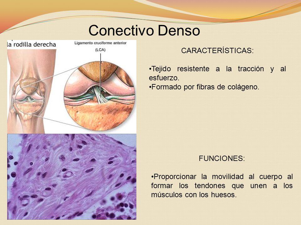 Conectivo Denso CARACTERÍSTICAS: