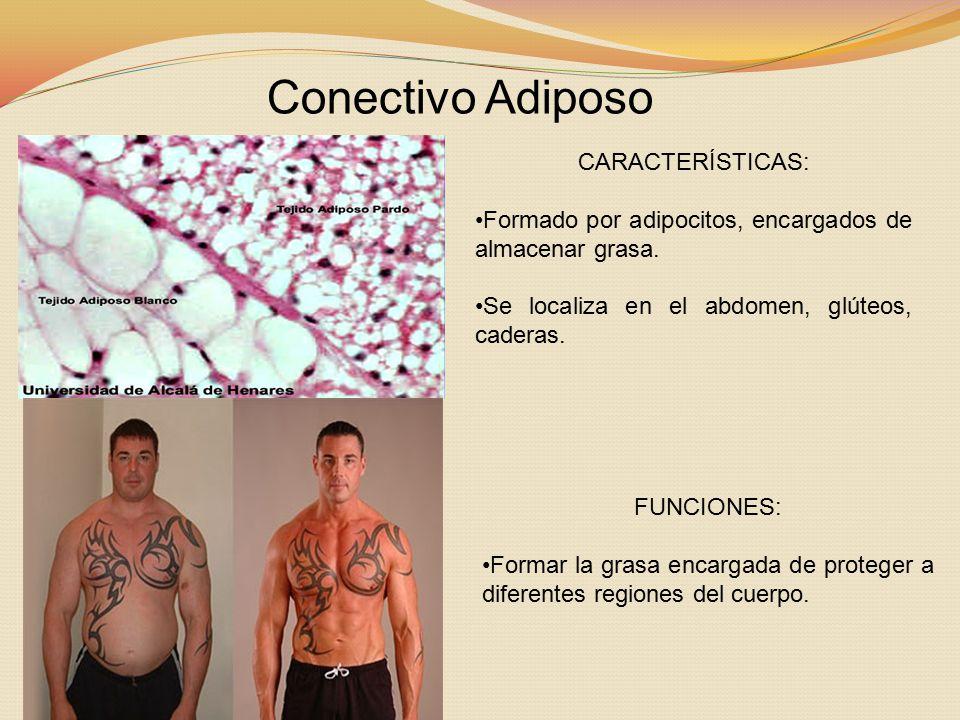 Conectivo Adiposo CARACTERÍSTICAS: