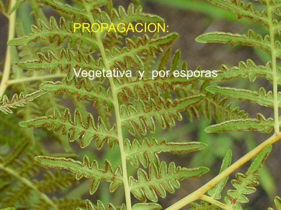 PROPAGACION: Vegetativa y por esporas
