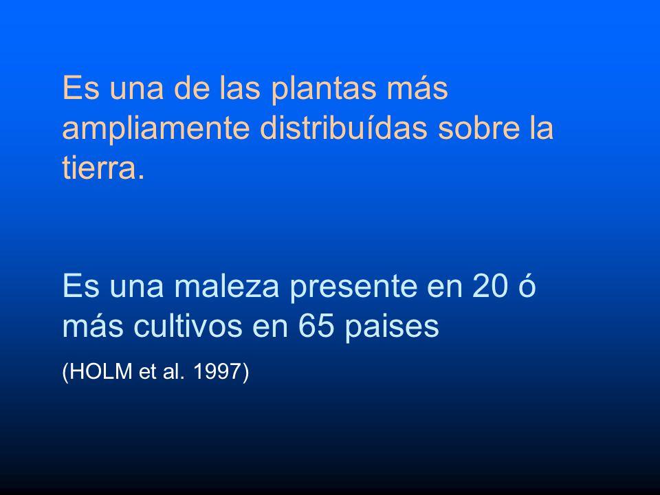 Es una de las plantas más ampliamente distribuídas sobre la tierra.