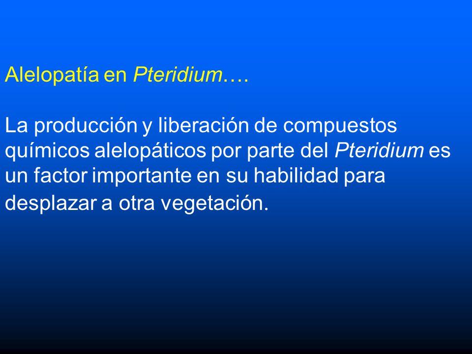 Alelopatía en Pteridium….