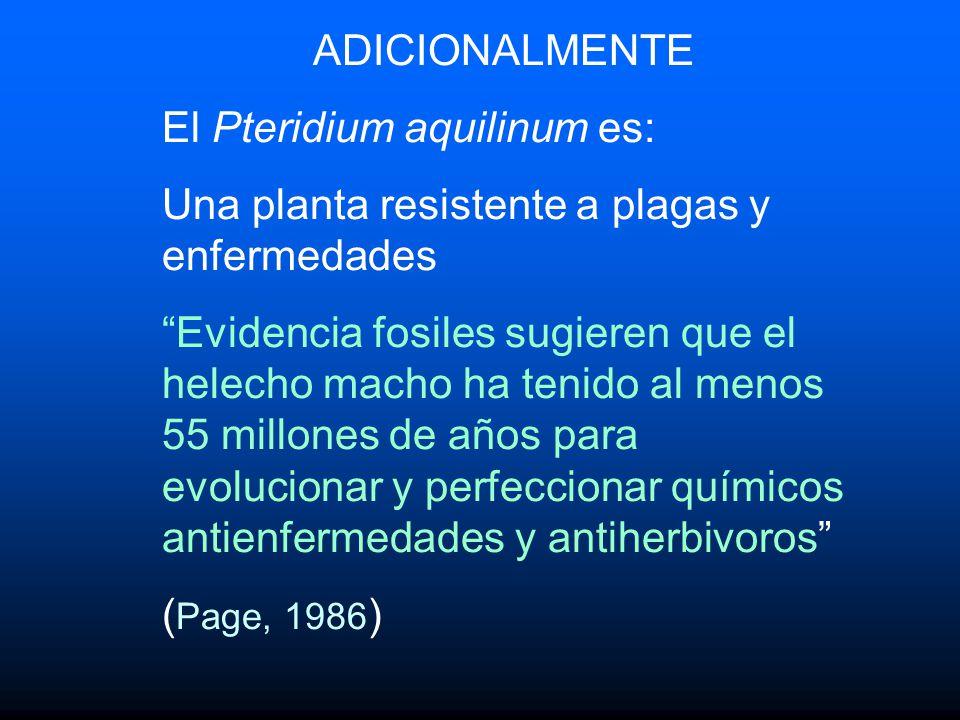 ADICIONALMENTE El Pteridium aquilinum es: Una planta resistente a plagas y enfermedades.
