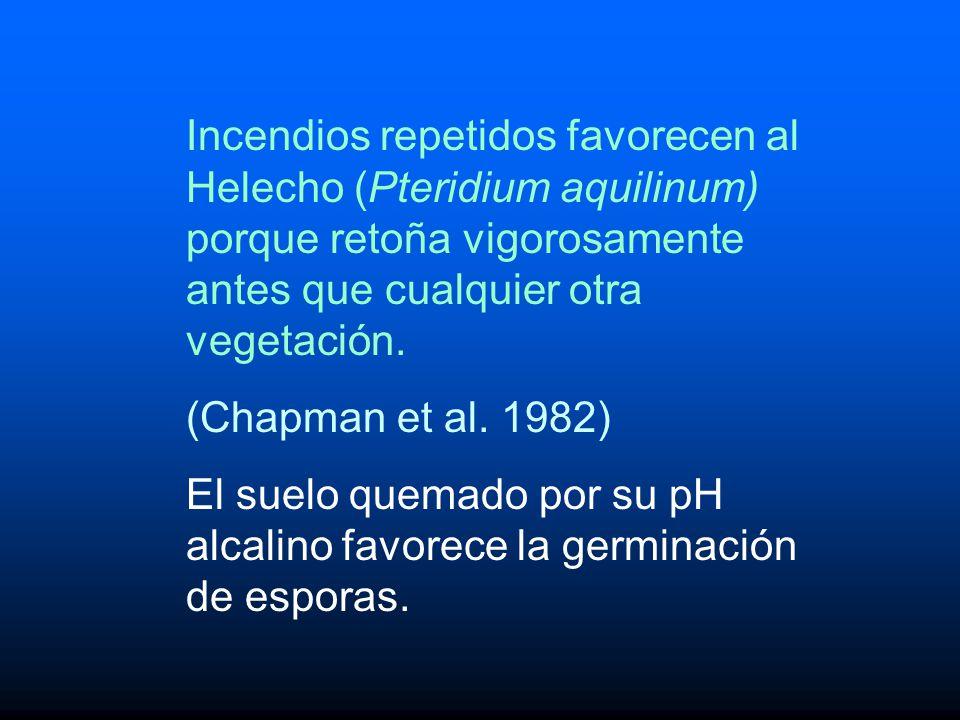 Incendios repetidos favorecen al Helecho (Pteridium aquilinum) porque retoña vigorosamente antes que cualquier otra vegetación.
