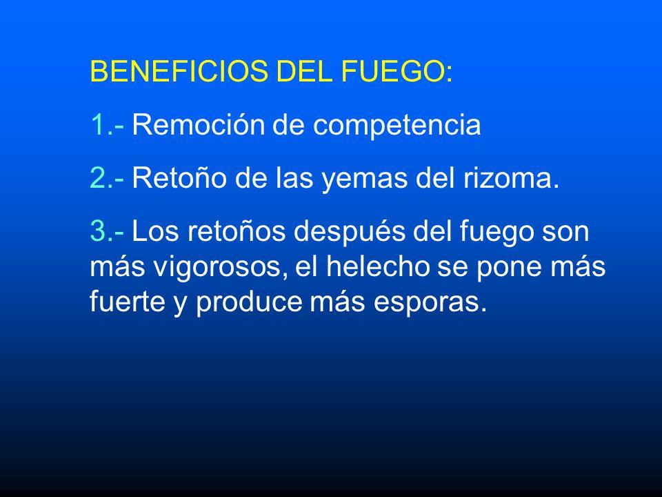 BENEFICIOS DEL FUEGO: 1.- Remoción de competencia. 2.- Retoño de las yemas del rizoma.