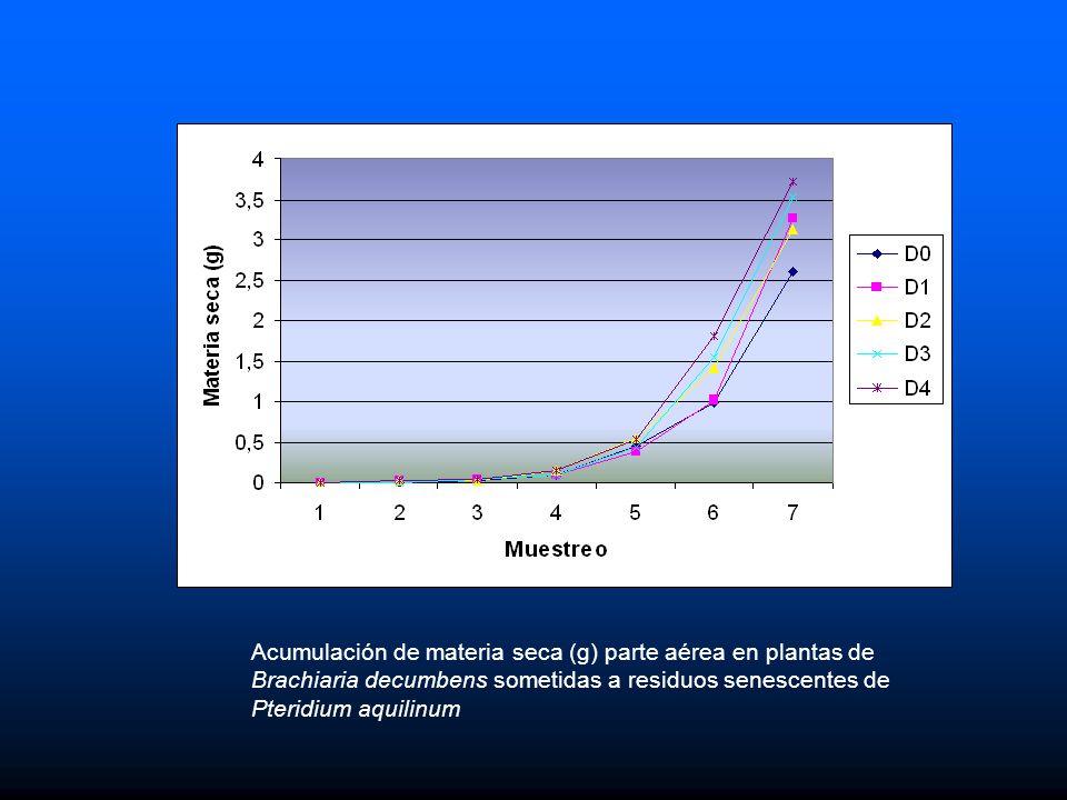 Acumulación de materia seca (g) parte aérea en plantas de Brachiaria decumbens sometidas a residuos senescentes de Pteridium aquilinum