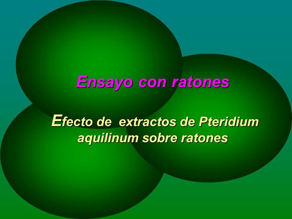 Ensayo con ratones Efecto de extractos de Pteridium aquilinum sobre ratones