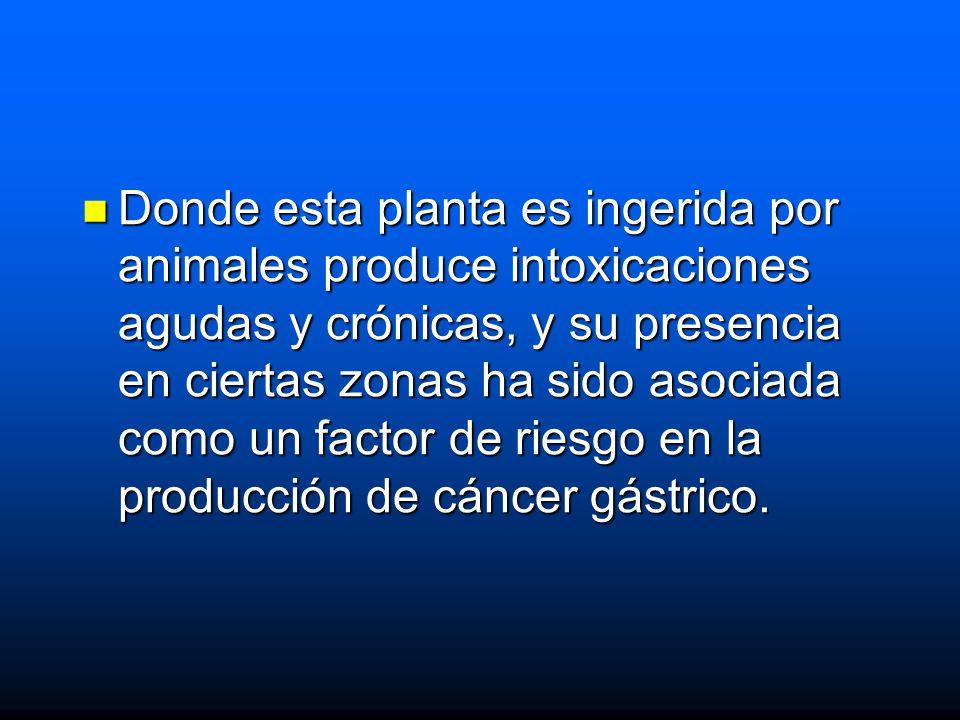 Donde esta planta es ingerida por animales produce intoxicaciones agudas y crónicas, y su presencia en ciertas zonas ha sido asociada como un factor de riesgo en la producción de cáncer gástrico.