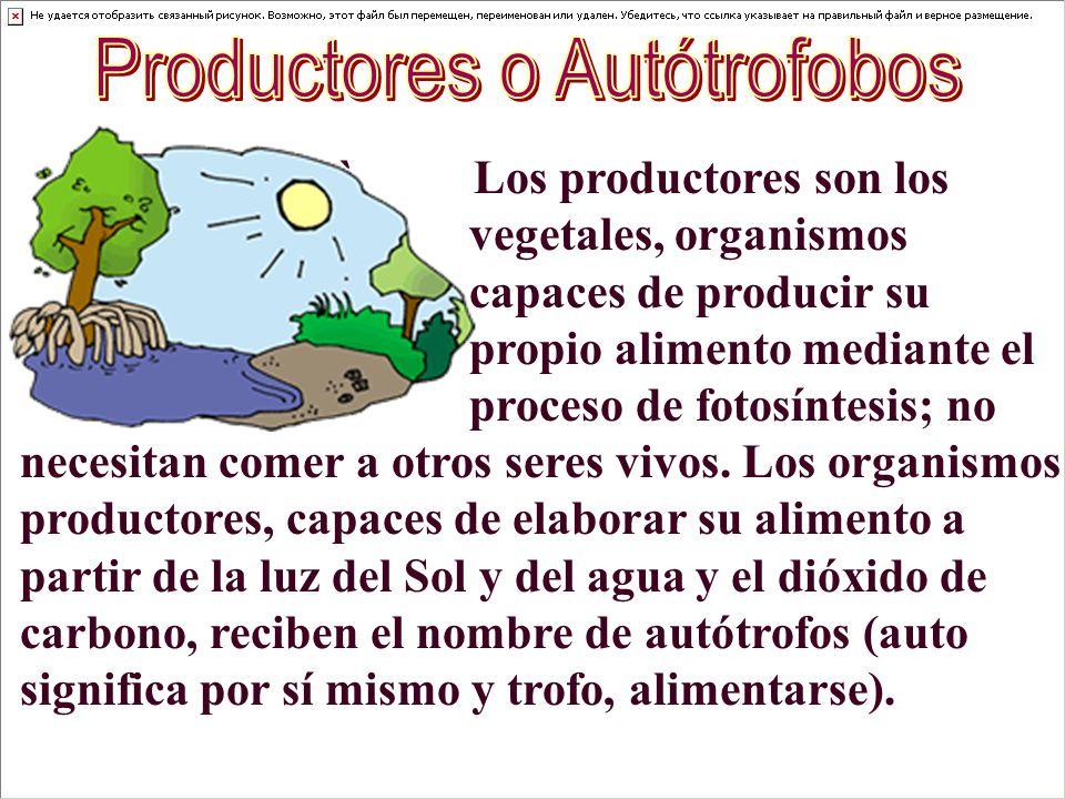 Productores o Autótrofobos