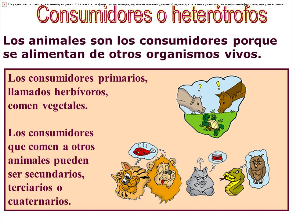 Consumidores o heterótrofos