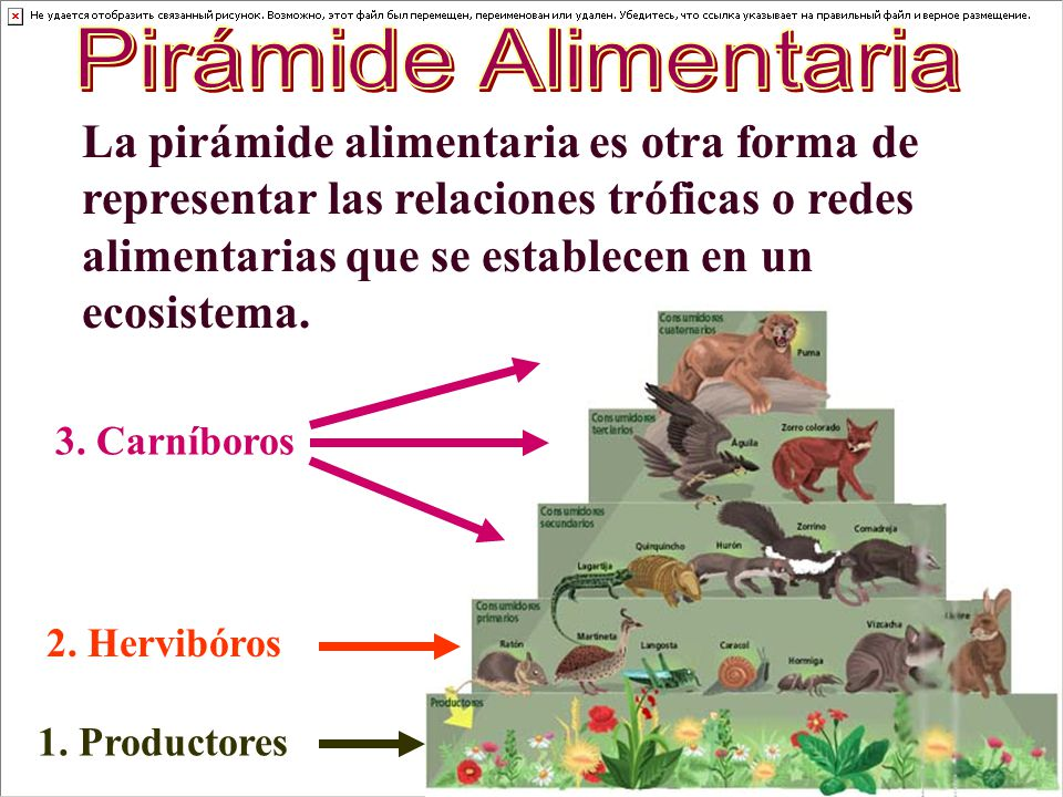 Pirámide Alimentaria La pirámide alimentaria es otra forma de