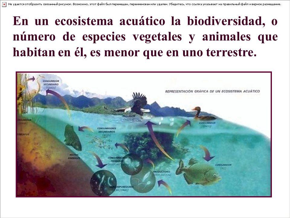 En un ecosistema acuático la biodiversidad, o número de especies vegetales y animales que habitan en él, es menor que en uno terrestre.