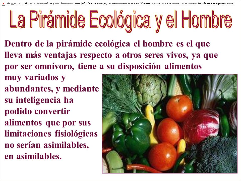La Pirámide Ecológica y el Hombre