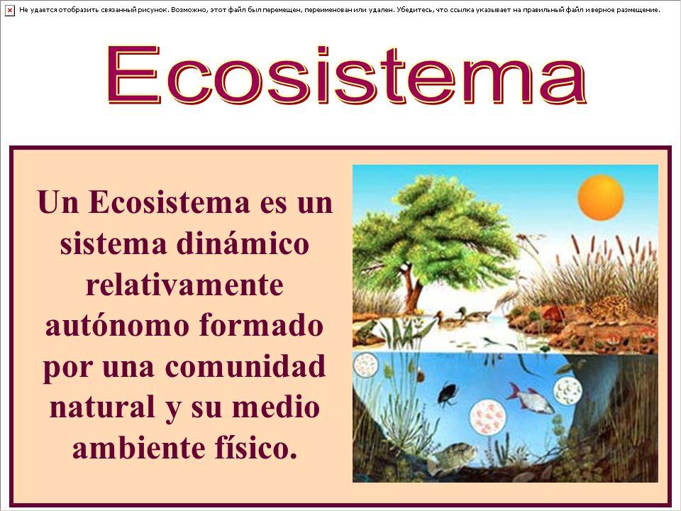 Ecosistema Un Ecosistema es un sistema dinámico relativamente autónomo formado por una comunidad natural y su medio ambiente físico.