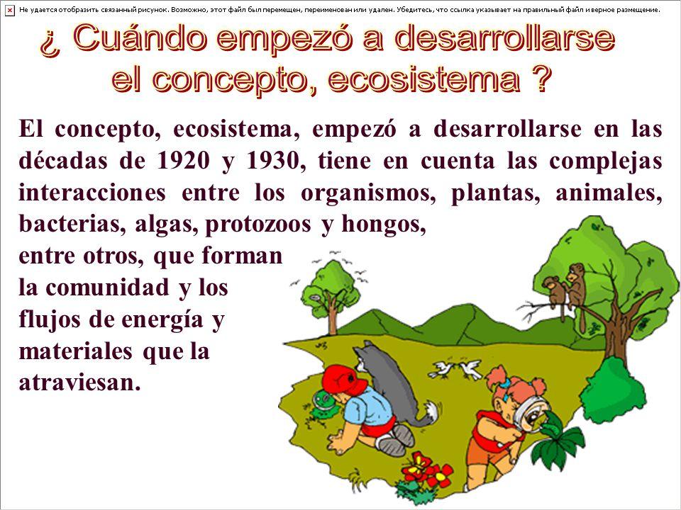 ¿ Cuándo empezó a desarrollarse el concepto, ecosistema