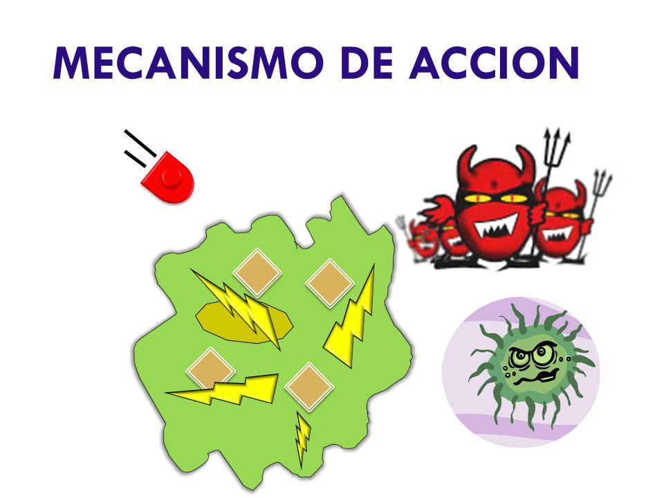 MECANISMO DE ACCION Los fotones entran dentro de la bacteria.