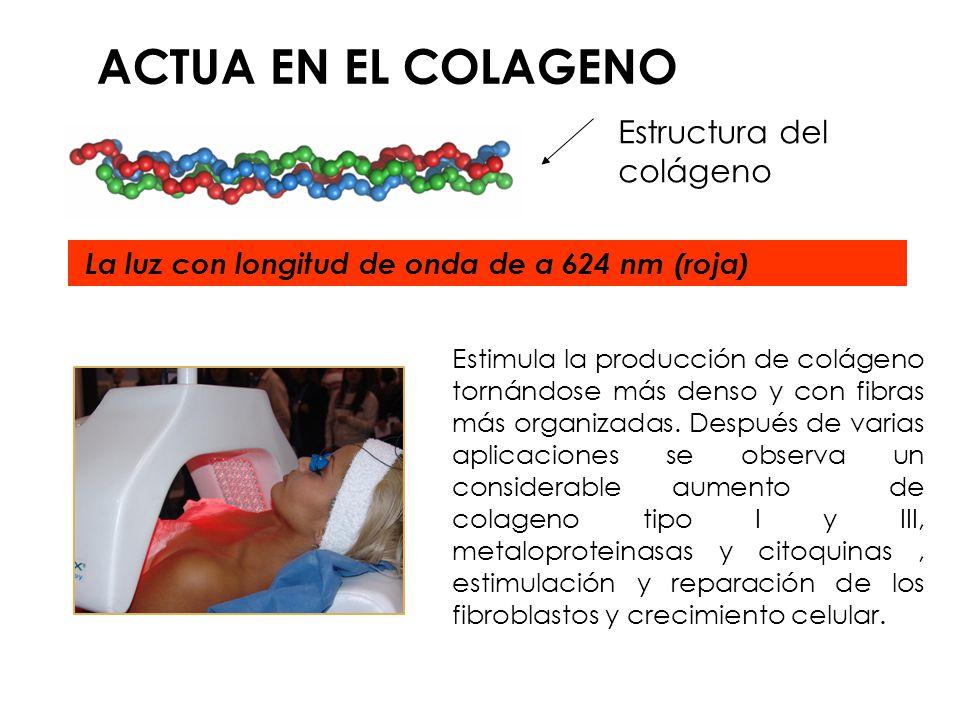 ACTUA EN EL COLAGENO Estructura del colágeno