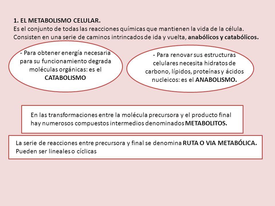 1. EL METABOLISMO CELULAR.