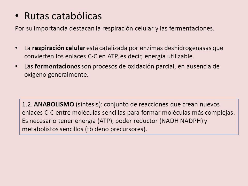 Rutas catabólicas Por su importancia destacan la respiración celular y las fermentaciones.