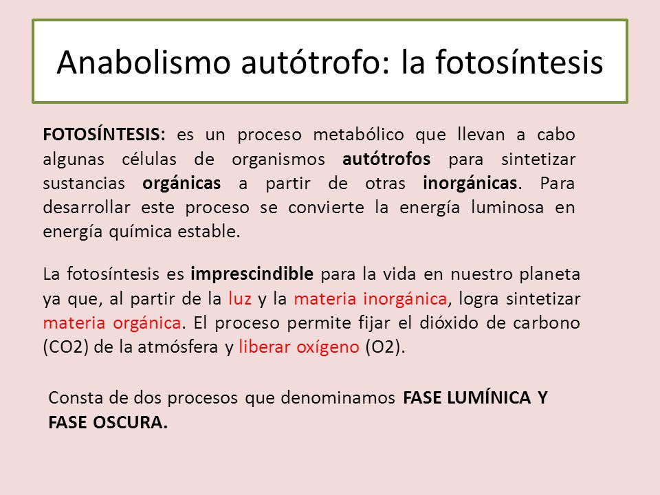 Anabolismo autótrofo: la fotosíntesis