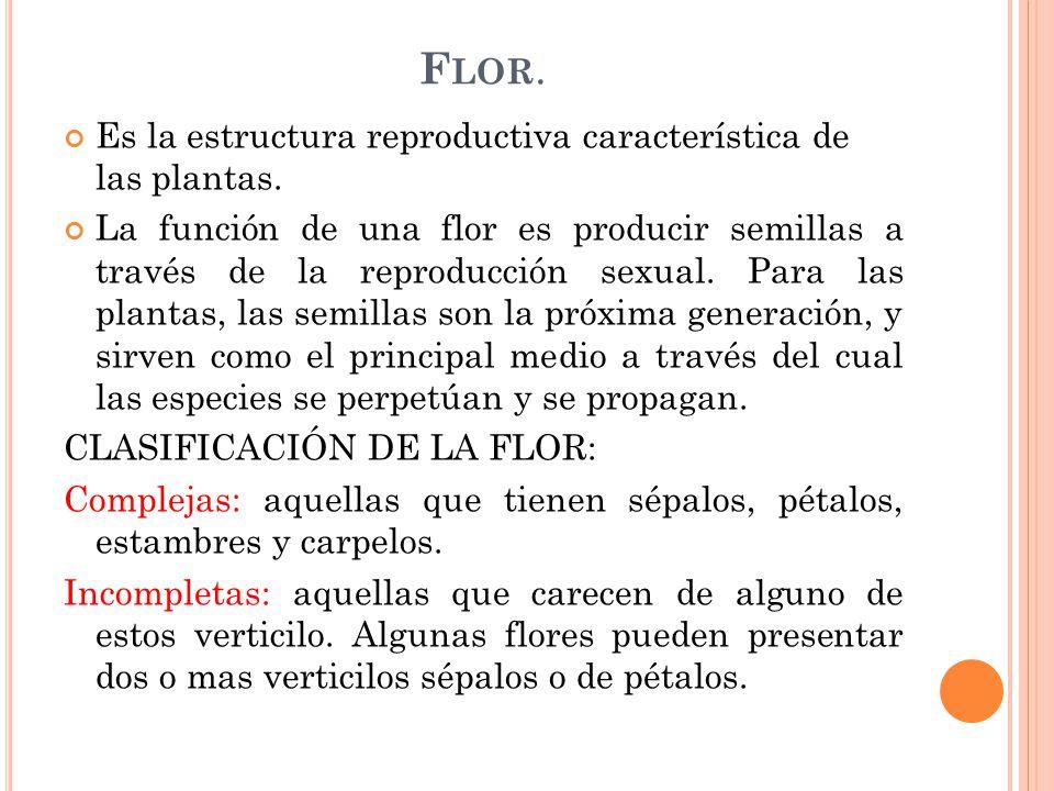 Flor. Es la estructura reproductiva característica de las plantas.