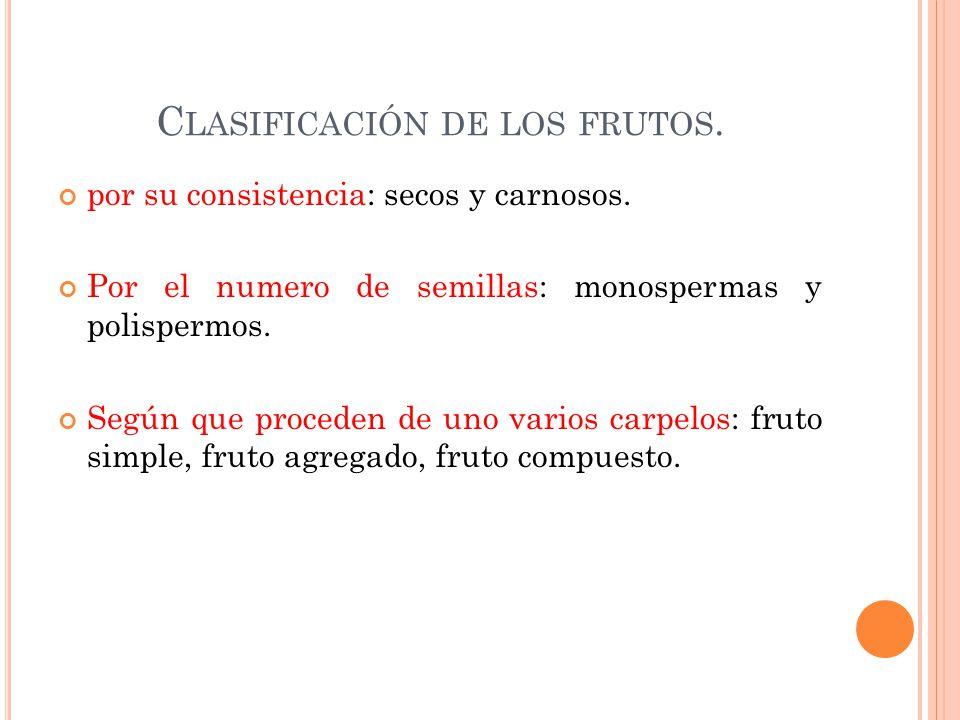 Clasificación de los frutos.
