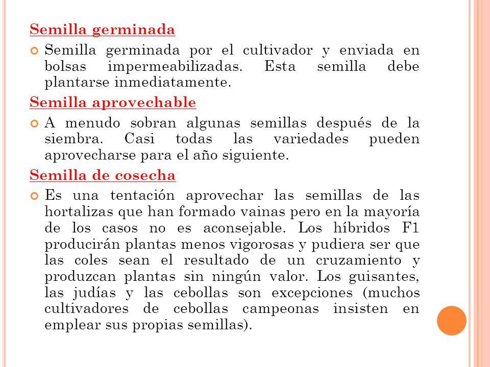 Semilla germinada Semilla germinada por el cultivador y enviada en bolsas impermeabilizadas. Esta semilla debe plantarse inmediatamente.