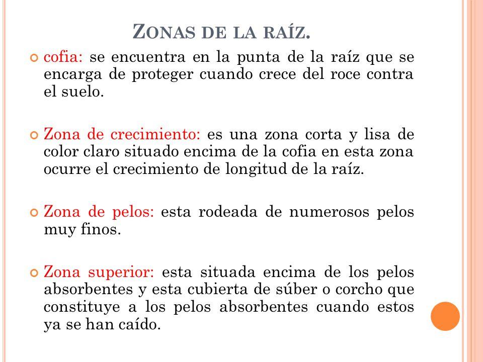 Ra z es un rgano que cumpla las siguientes funciones for Como esta constituido el suelo
