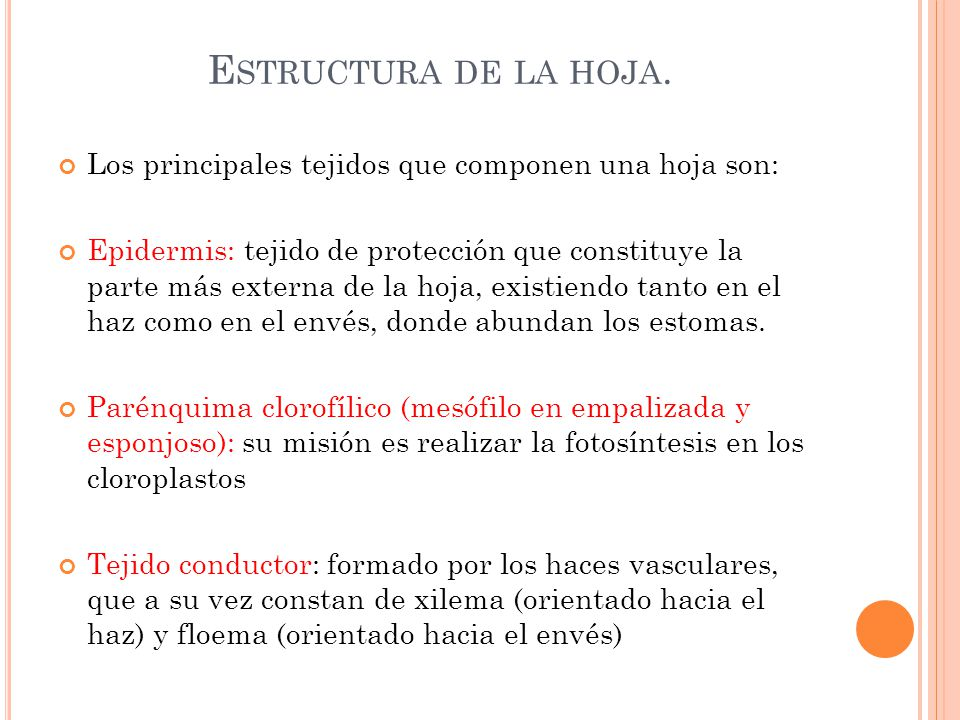 Estructura de la hoja. Los principales tejidos que componen una hoja son: