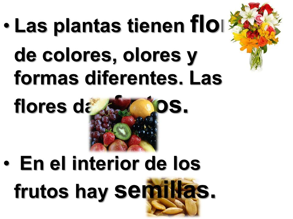 Las plantas tienen flores