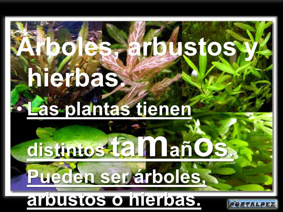Árboles, arbustos y hierbas.