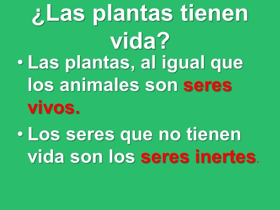 ¿Las plantas tienen vida