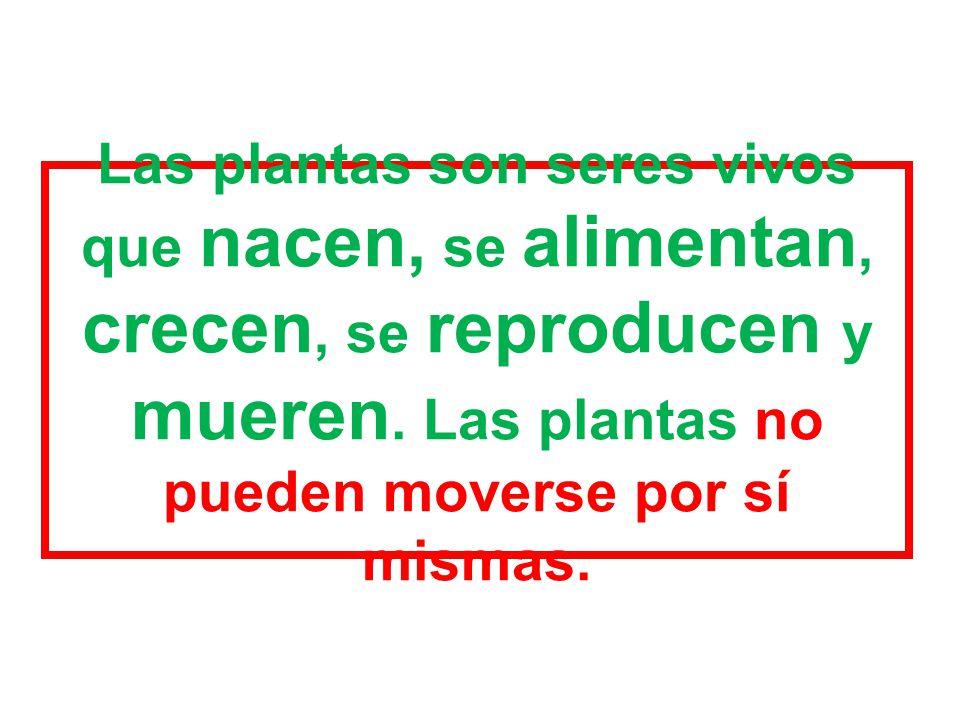 Las plantas son seres vivos que nacen, se alimentan, crecen, se reproducen y mueren.