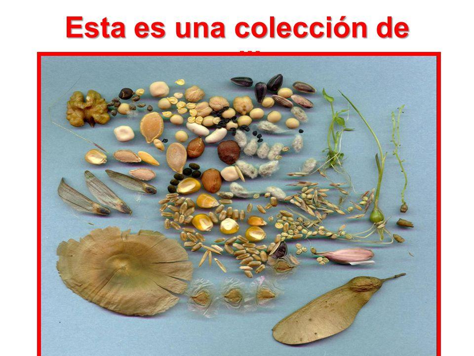 Esta es una colección de semillas