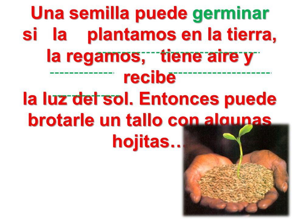 Una semilla puede germinar si la plantamos en la tierra, la regamos, tiene aire y recibe la luz del sol.