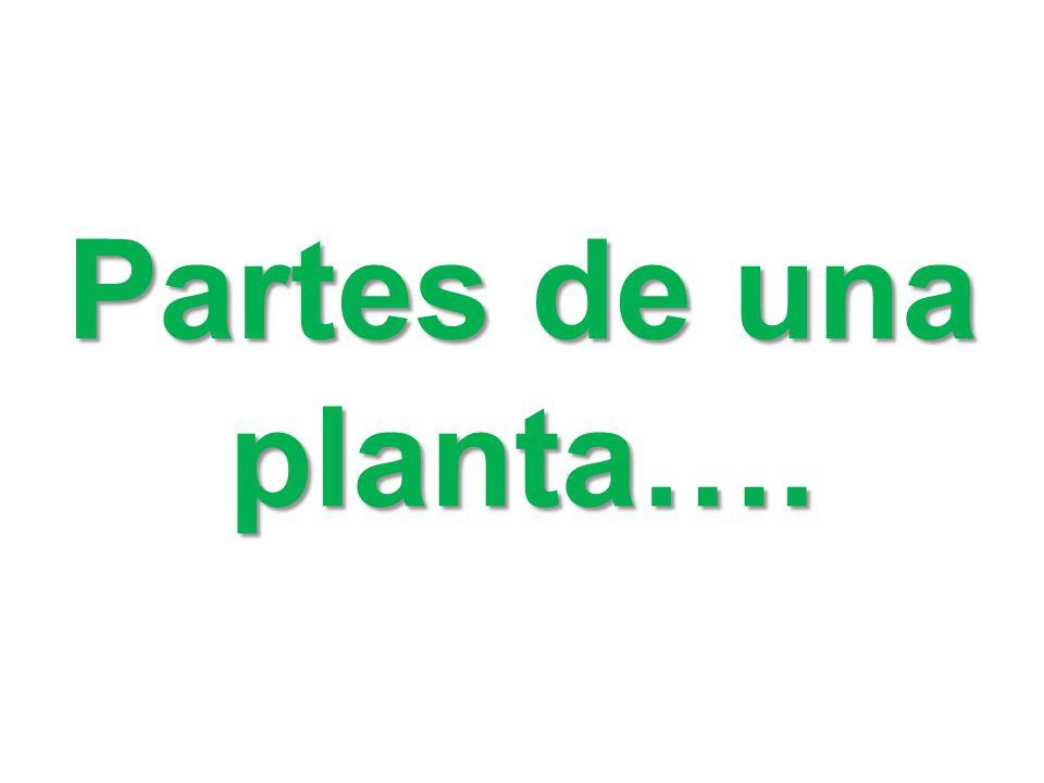 Partes de una planta….