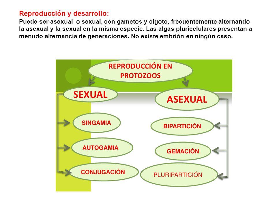 Reproducción y desarrollo: