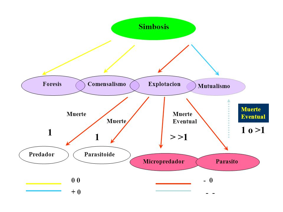 1 o >1 1 1 > >1 - - Simbosis 0 0 - 0 + 0 Foresis Comensalismo
