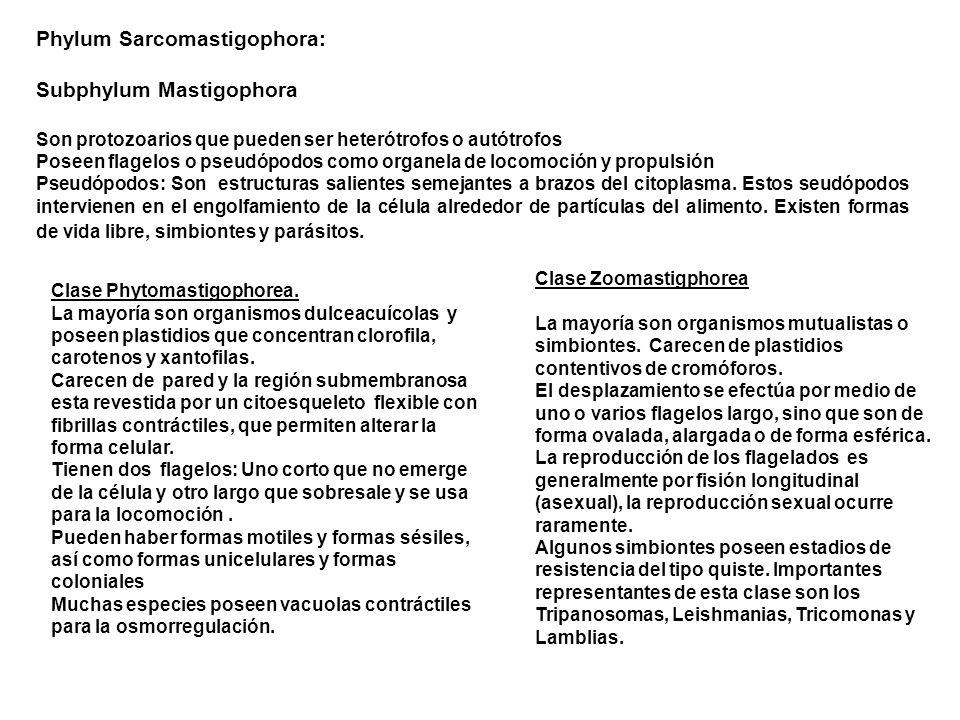 Phylum Sarcomastigophora: Subphylum Mastigophora