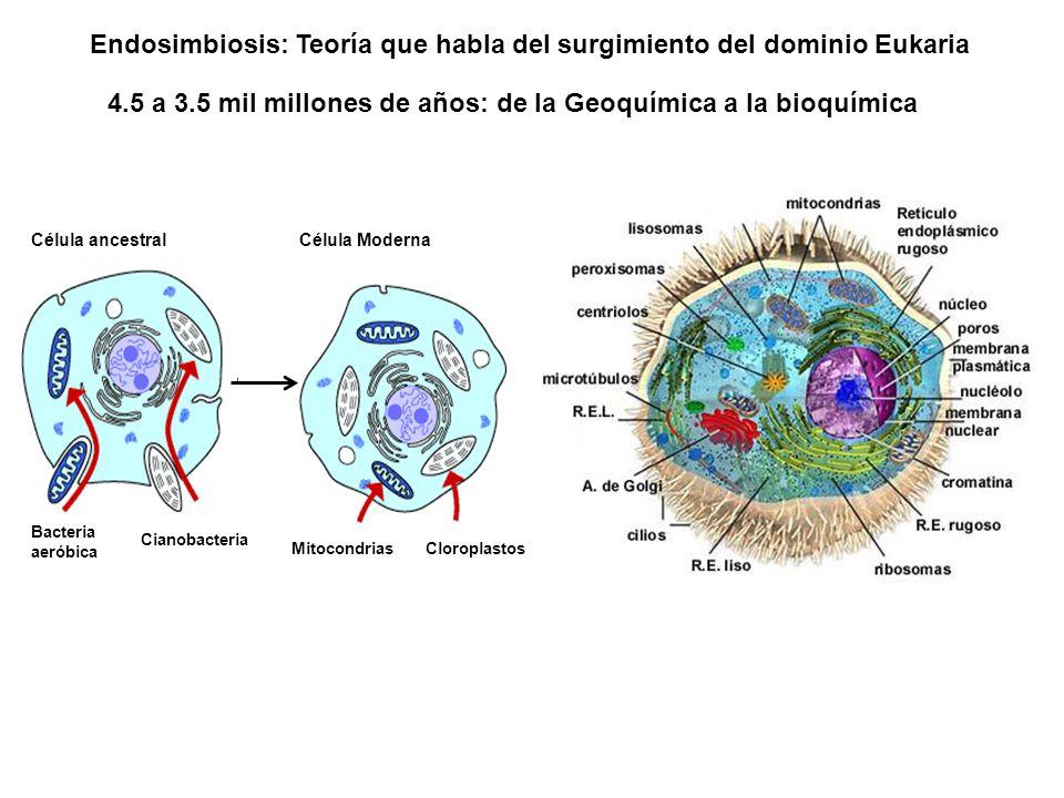 Endosimbiosis: Teoría que habla del surgimiento del dominio Eukaria