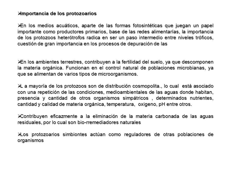Importancia de los protozoarios